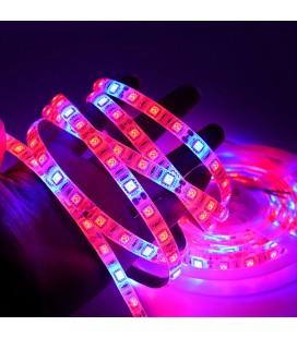Фитолента для растений SMD 5050, 60 диодов/метр, 12 В, 3 красных +1 синий, IP65  c DC разъемом